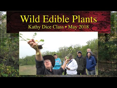 Wild Edible Plants Class by Kathy Dice • May 2018 • Fairfield, Iowa