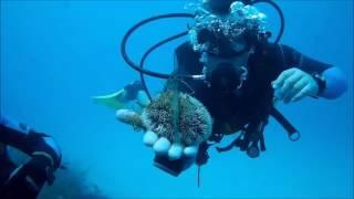 Дайвинг в Доминикане 2016(На видео съемки с карибского моря. 2 дайва. Первый на кораллы, а второй на корабль, который затопили специаль..., 2016-08-06T21:37:46.000Z)