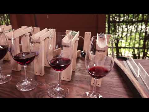 jeunesse-wine-purim-video