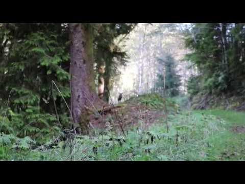 Unedited 2016 Roosevelt Elk Archery Hunt