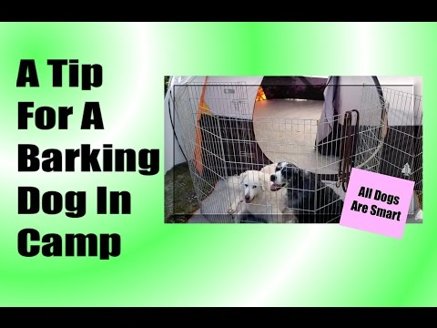 Camping With Dogs -Tent Placement To Prevent Barking In The Campsite