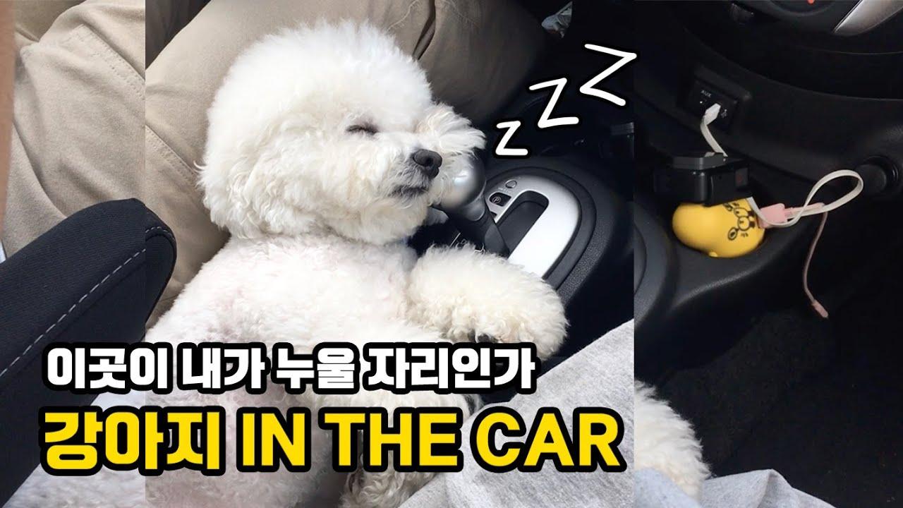 채널명 변경합니다 ▶ 순무는자는중 ㅋㅋㅋ 강아지랑 자동차 타기