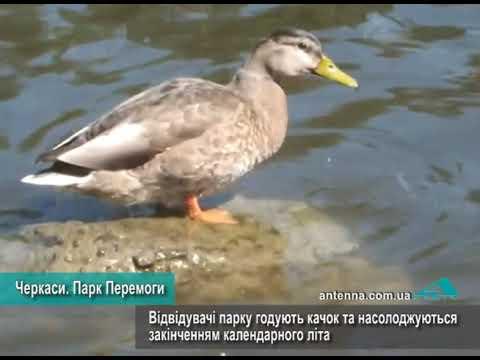 Телеканал АНТЕНА: Черкаси. Парк Перемоги