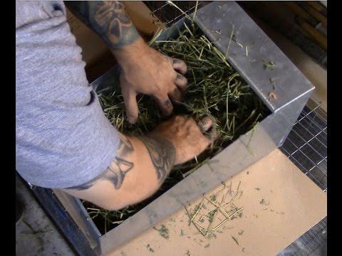 Raising meat rabbits: preparing a nest box