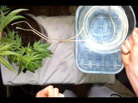 Arroser Vos Plantes Pendant Votre Absence Astuce Jardinage