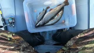 РЫБАЛКА 2 2020 Лучшая рыбалка на щуку в этом году на реке Ямсовей