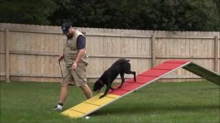 Corsa (Cane Corso) Boot Camp Dog Training Video