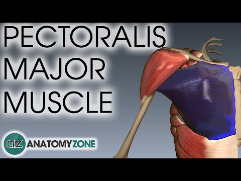 Pectoralis Major Muscle Anatomy