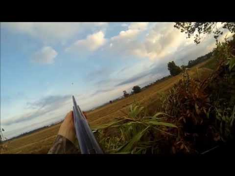 Chasse A La Palombe, Canards, TOURNESOL SUPERBE OUVERTURE 2013!! HUNTING PIGEON Gopro Hero3 Black