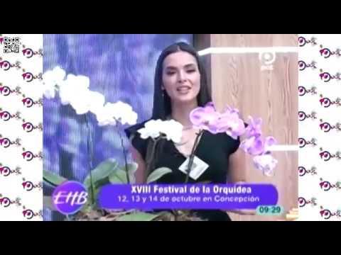 Festival 2018 en PAT