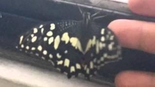 毛毛蟲變蝴蝶
