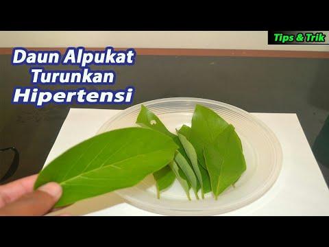 khasiat-daun-alpukat