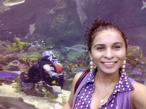 """[video] My Visit To """"dubai Aquarium!"""""""