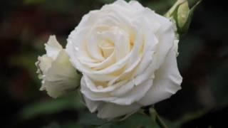 西田佐知子さんの歌で「女の意地」を歌ってみました。お聴き頂けると嬉...