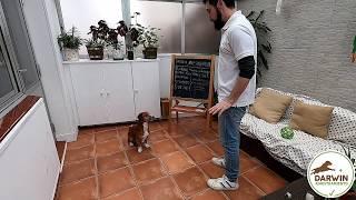 Adiestramiento canino Darwin, clase Nº1: Luring
