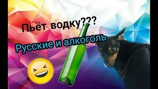 Русские и алкоголь /Собака пьёт водку ! / Veronika & pets