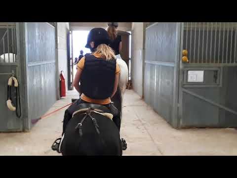 [Équitation]Cour De Mécanisation