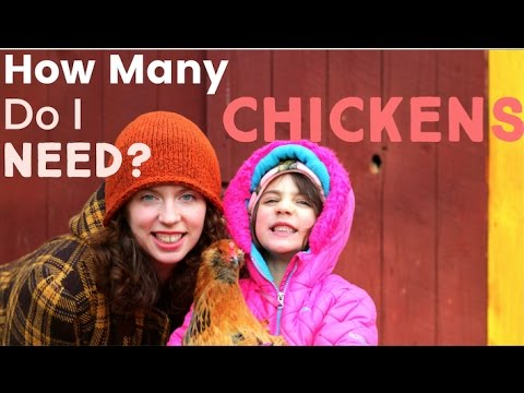 How Many Chickens Do You Need?