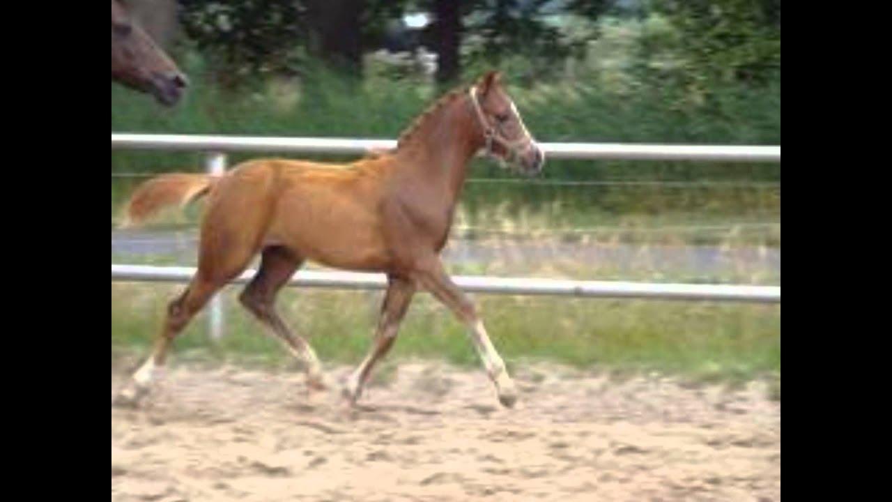 alle paardenrassen