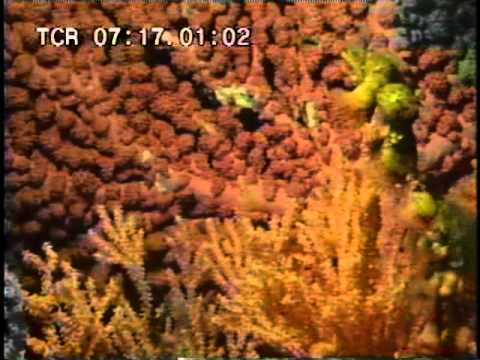 Deep Sea Corals Research