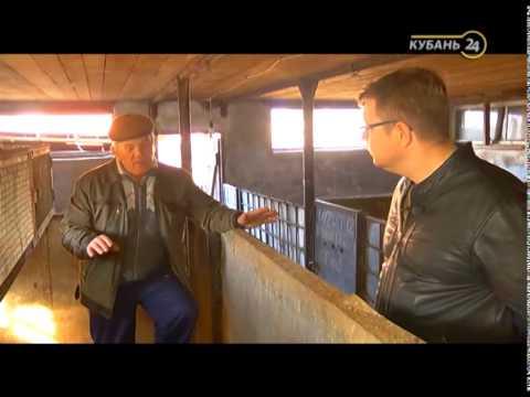 видео: Сельские истории с Сергеем Курочкиным. Нутрии