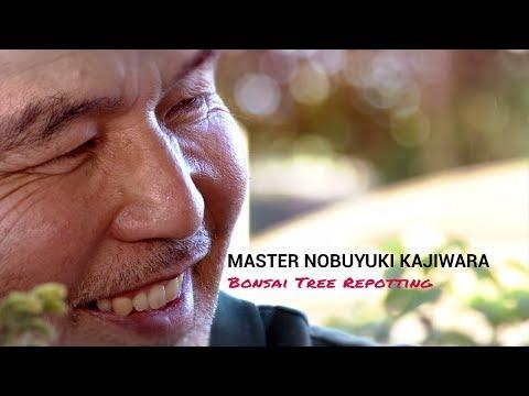 171) Bonsai Masterclass - Stress free Bonsai Repotting With Master Nobu Kajiwara