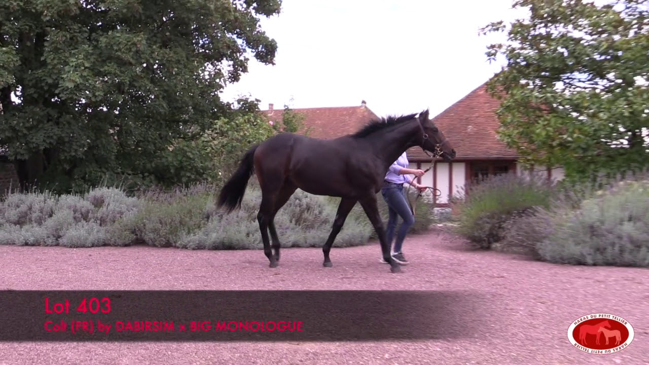 arqana octobre 2019 lot 403
