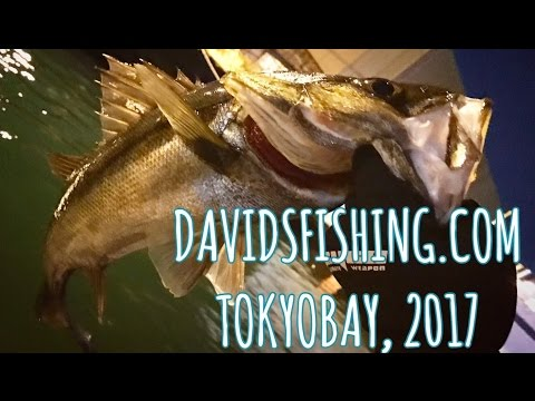 Sea Bass Fly Fishing, Tokyo Japan