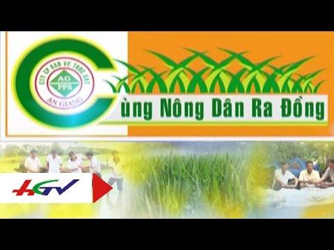 Chăm sóc, phục hồi vườn cây ăn trái trong mùa mưa bão   HGTV