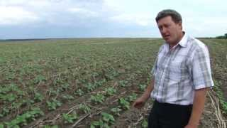 Подсолнечник No-Till - 3 (Agronomy No-Till farming)
