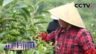 [中国新闻] 全国人大代表:乡村振兴促进农业丰收农民增收 | CCTV中文国际