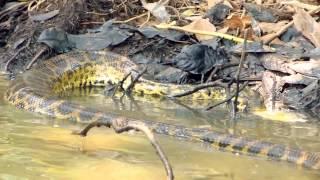 Cópia de snake attack for eat piranha