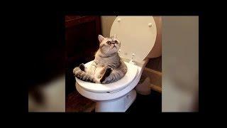 「おもしろ動物」かわいい猫 - かわいい犬 - 最も面白いペットの動画・...
