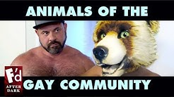 Gay Animal Labels and Fursona Stereotypes   Fd After Dark