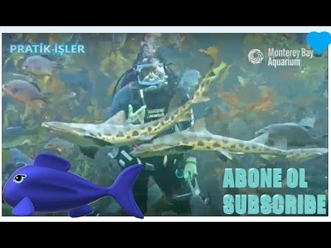 DEV AKVARYUM BALIKLARINI BESLEMEK FEEDING GIANT AQUARIUM FISHES #RELAX