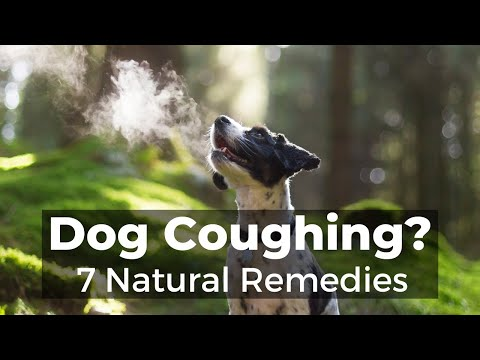 dog-coughing:-how-to-quickly-stop-it-with-7-natural-remedies