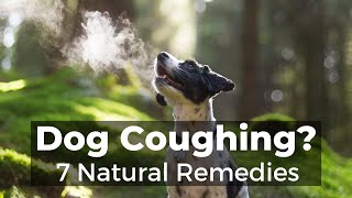 Dog Coughing: How To Quickly Stop It With 7 Natural Remedies