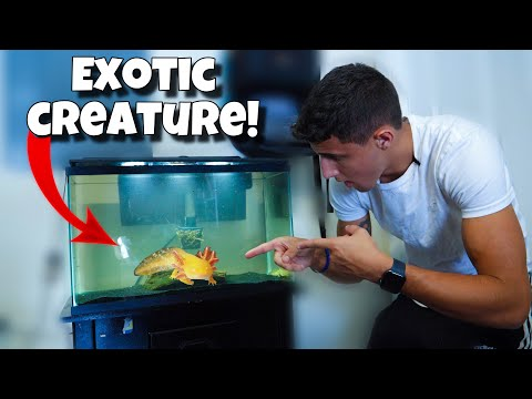 My *NEW* Pet EXOTIC WATER-DOG!!