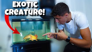 my-new-pet-exotic-water-dog
