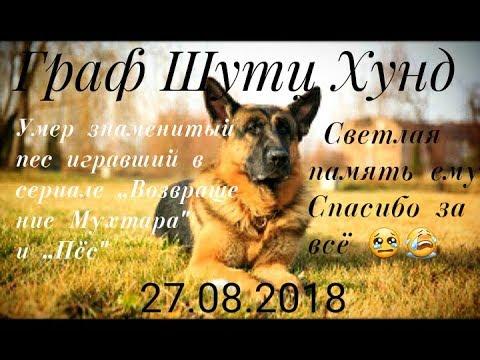 Умер знаменитый пёс Граф Шутц Хунд(27.08.2018)😭😭😭Вечная память,спи спокойно😭😭😭