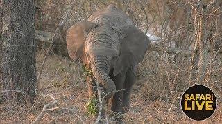 safariLIVE- Sunset Safari - September 18, 2018 thumbnail