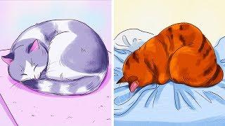 Поза спящей кошки может многое о ней рассказать