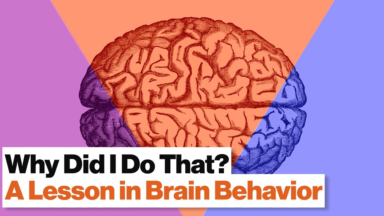 3 Brain Systems That Control Your Behavior: Reptilian, Limbic, Neo Cortex | Robert Sapolsky