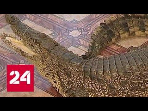Новый закон защитит животных от нерадивых хозяев