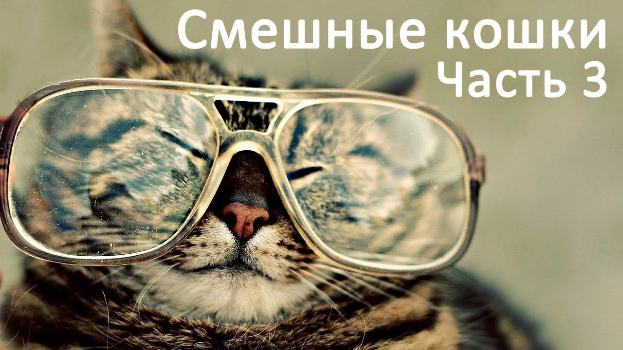 Смешные коты и кошки – видео приколы с кошками #3