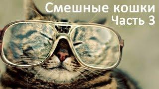 Смешные коты и кошки - видео приколы с кошками #3