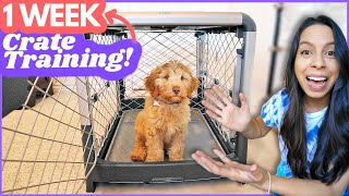 5 Crate Training Steps that ACTUALLY Work 🙌 This is how I crate trained Wally in ONE WEEK 🐶