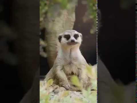 Vidéo modhik hhh😂😂