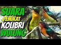 Pikat Khusus Kolibri Wulung Muncang Dijamin Ampuh Auto Datang Semua  Mp3 - Mp4 Download