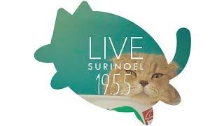 생방송-수리노을-고양이가족-19-5-5-live-suri